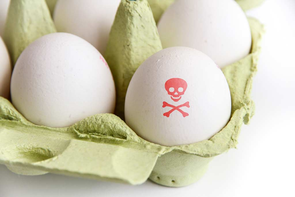 eggs_salmonella_food_illness_food_safety
