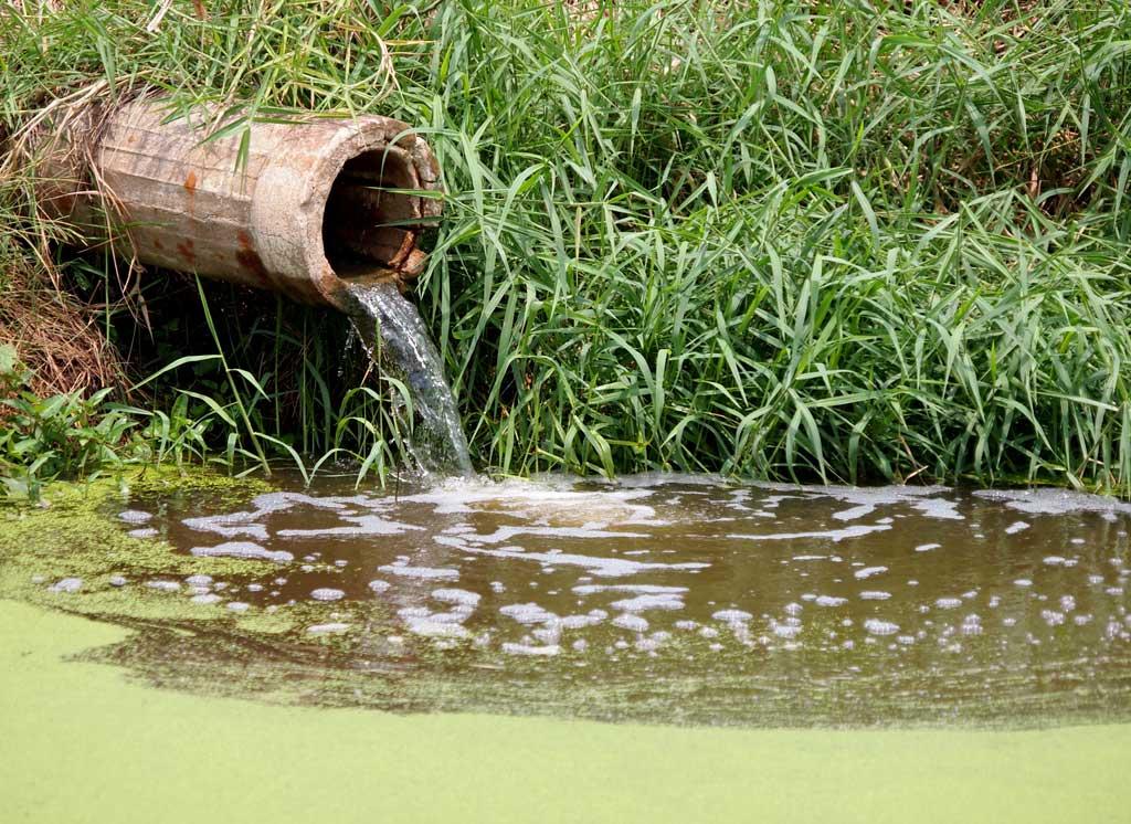 farm_runoff_algae_polltuion_food_safety_illness_