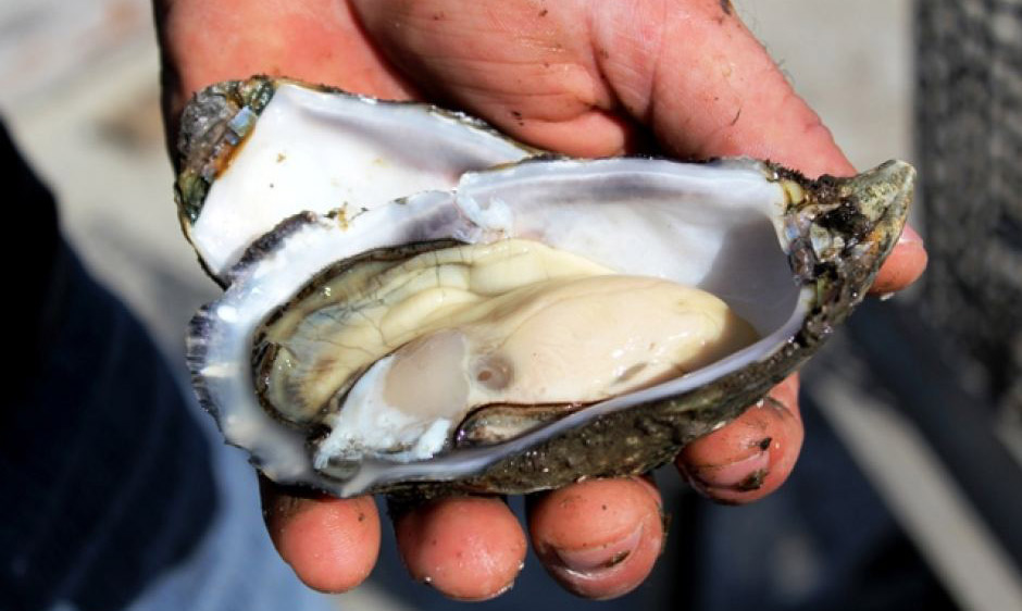 oyster-food-safety