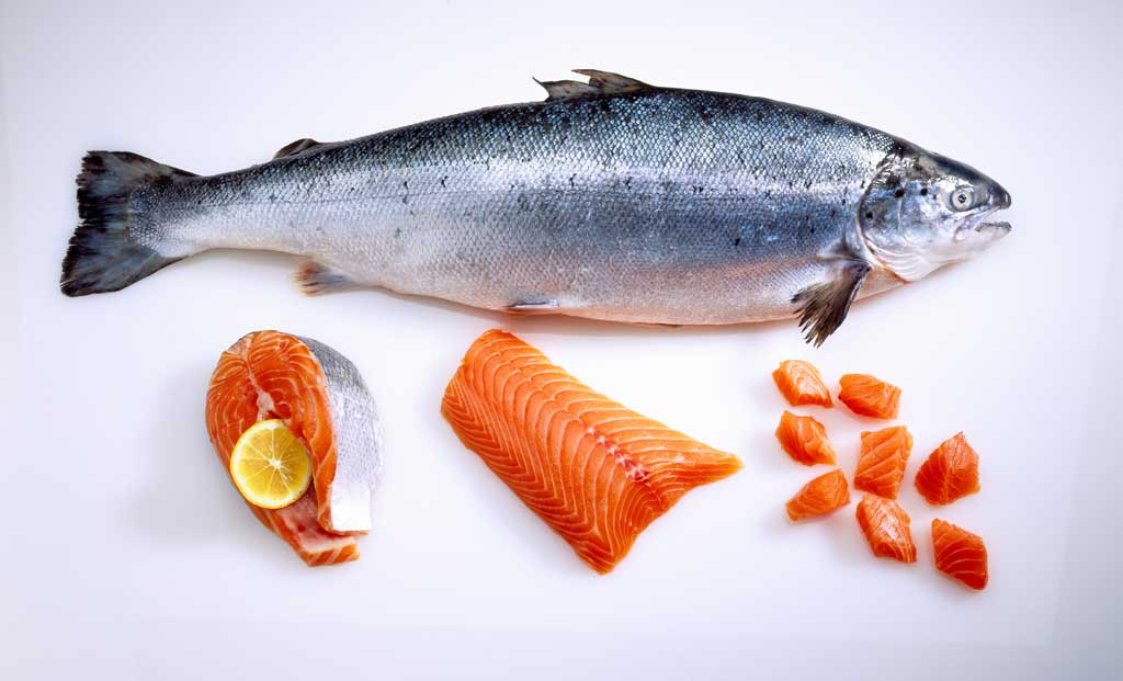 safe_seafood_food_safety_illness