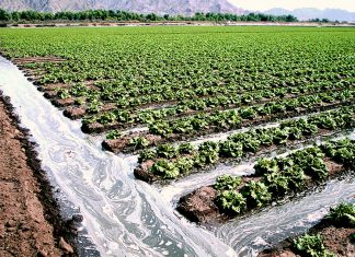 agricultural-runoff-food-safety