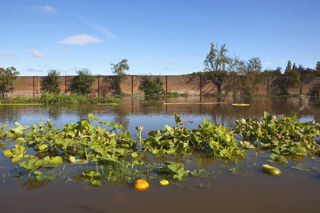 food_safety_produce_flooding_illness
