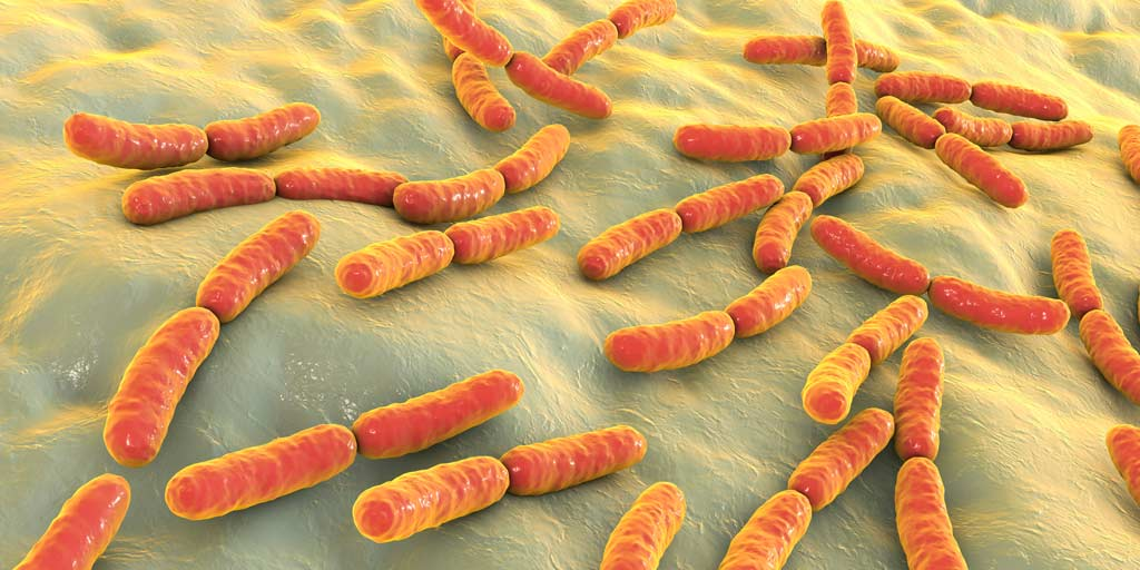 bacteria_food_safety_illness