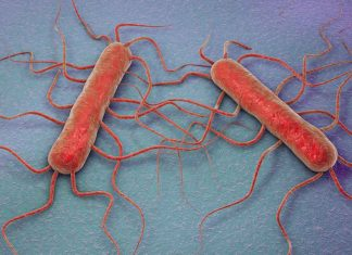 listeria_bacteria_food_safety_illness