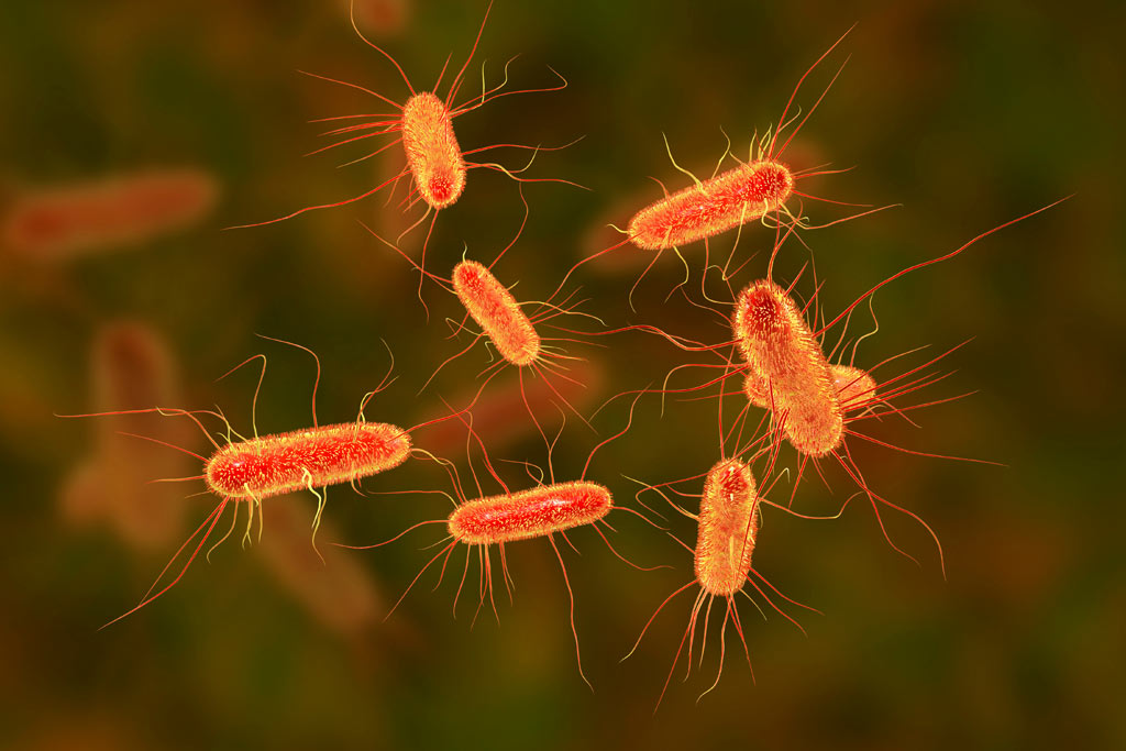 bacteria_virus_salmonella_food_safety_illness