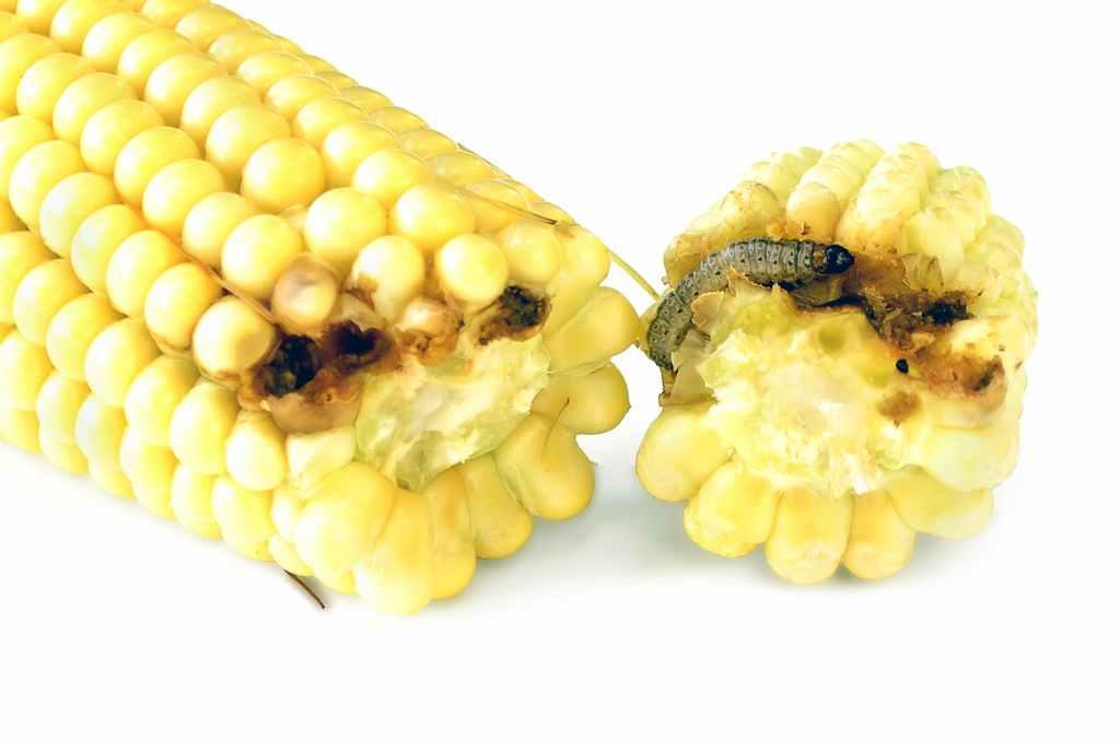 food_contamination_food_safety_illness_