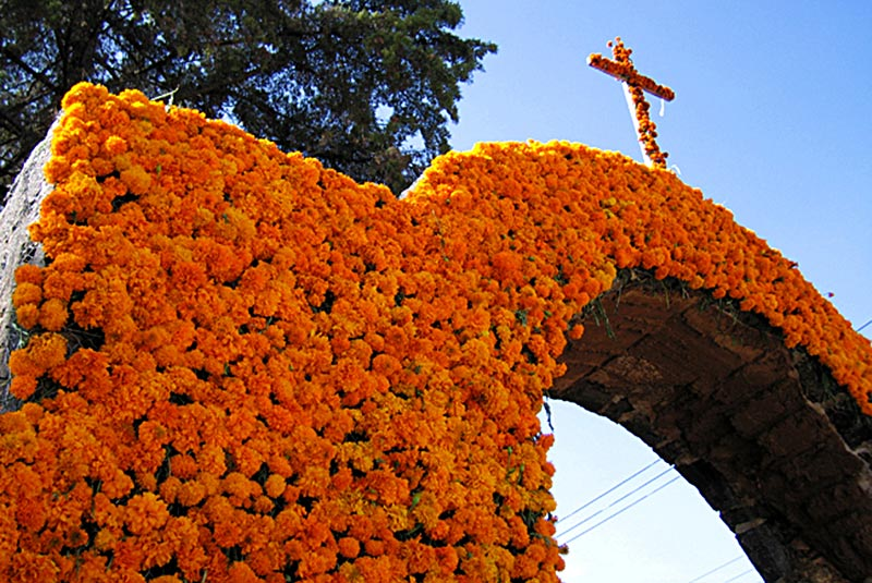 marigolds_dia_muertos_day_dead