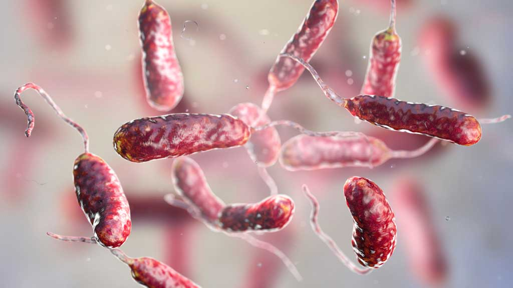 bacteria_virus _food_safety