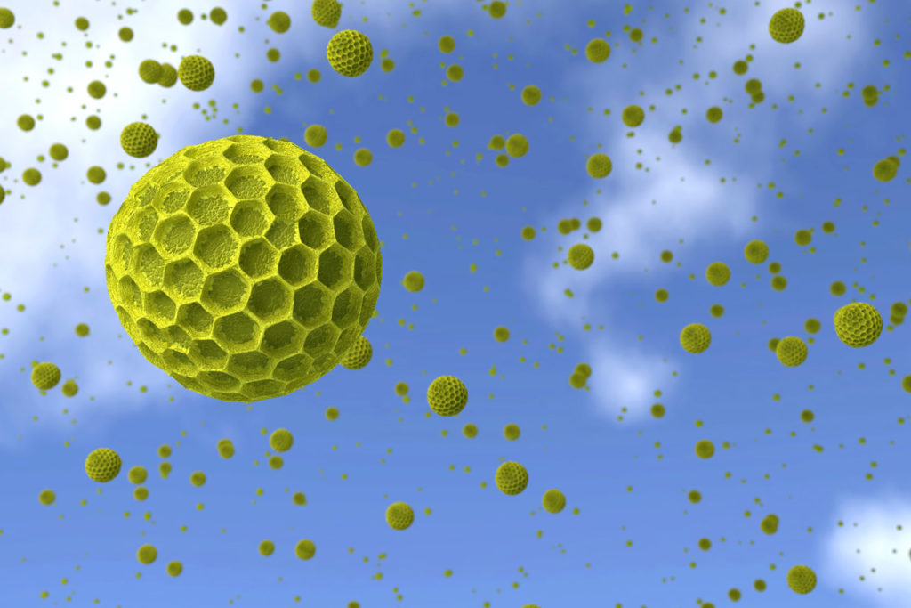 Pollen Allergies And Which Foods To Avoid